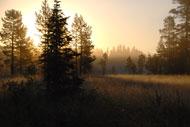 En vacker morgon på pass i skogen