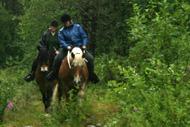 Jenni och Dorte på skogstur med hästarna