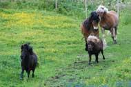 Hästarna får sällskap i hagen av Gardenia och Elina