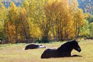 Hästarna trivs i höstsolen
