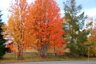 Höstfärger framför huset