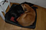 Våra egna hundar behövde inte arbeta riktigt lika hårt...