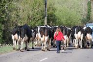 Irländsk traffikstockning