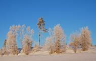 Vacker vinterdag