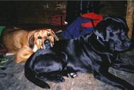 Zingo och Maja - älskade och saknade